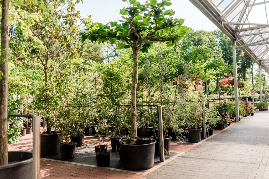 bomen almelo heerdink tuincentrum