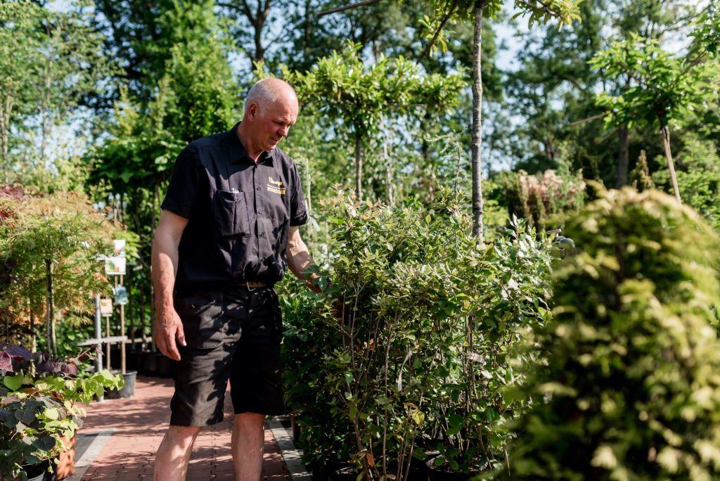 bomen en planten tuincentrum