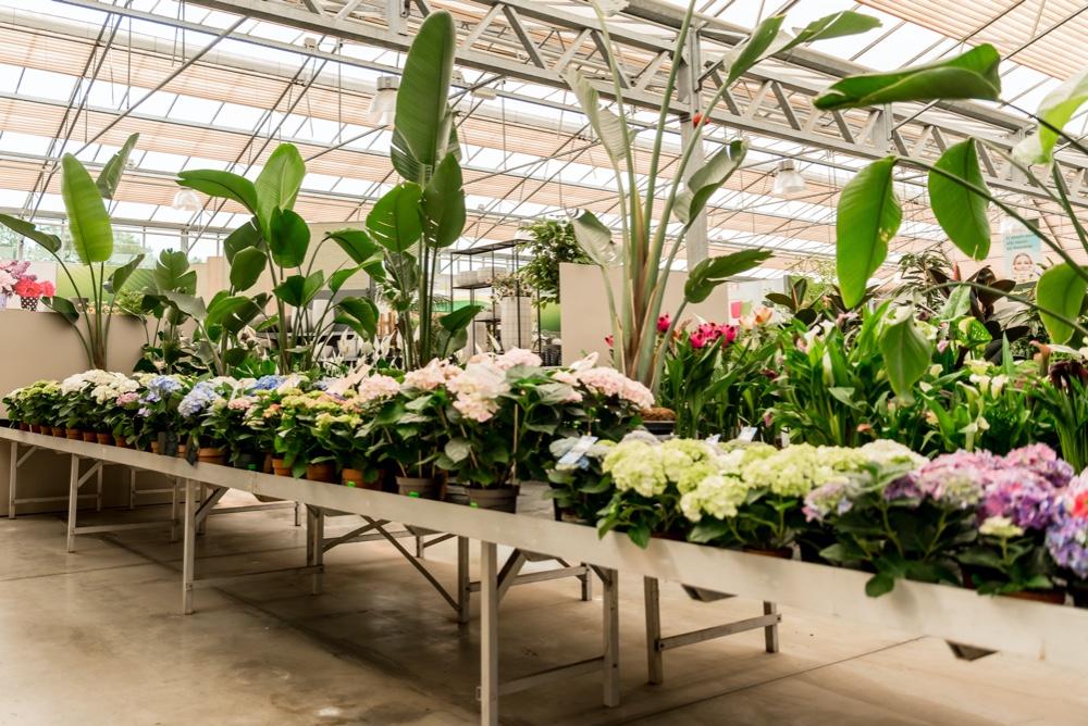 kamerplanten tuincentrum heerdink